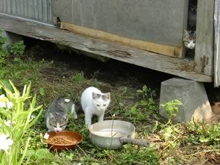 母親ネコ1匹と子猫4匹