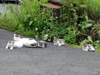 母猫と子猫の写真