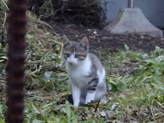 庭にたたずむ子猫の写真
