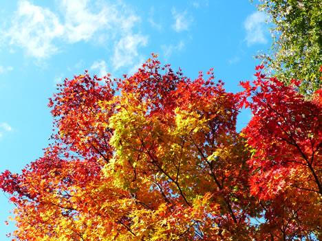 青森の紅葉の写真画像