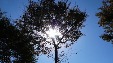 木漏れ日写真画像