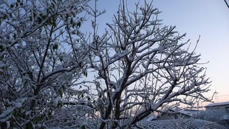 青森の初雪と木の写真